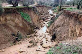 La lluvia erosiona y puede alterar la calidad del suelo