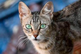 Debido al estrés, los gatos pueden desarrollar enfermedades durante la cuarentena