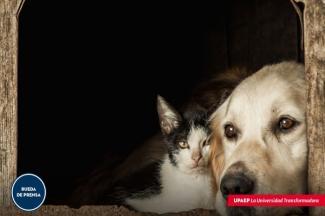 La pandemia del COVID-19, impacta a las mascotas de compañía